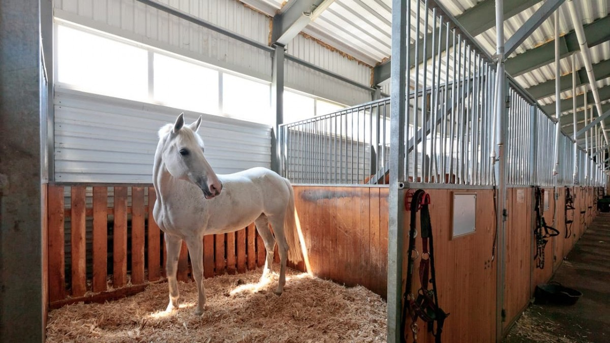 Строительство конюшен из металлоконструкций, белая лошадь